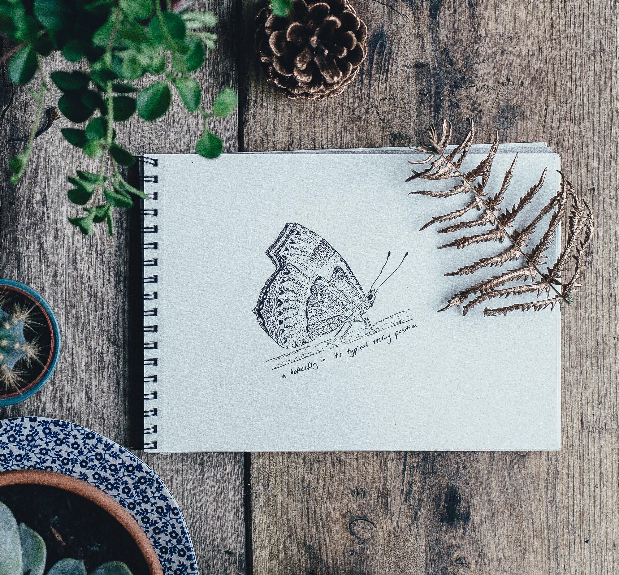 Disegno a matita di farfalla su block notes